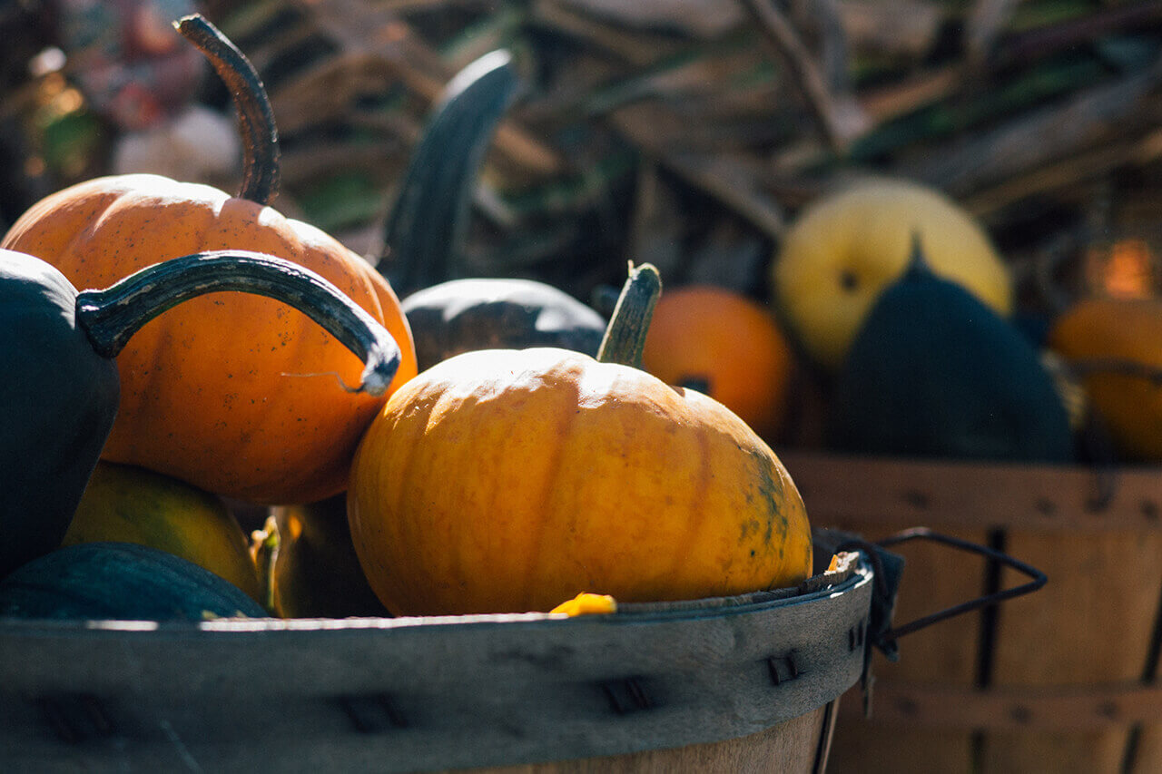 recipes with pumpkin under 350 kcal