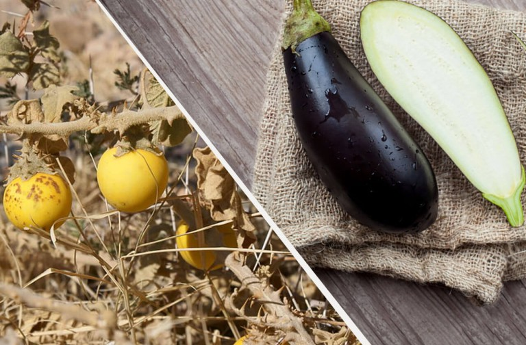 fruits-and-vegetables-before-and-now